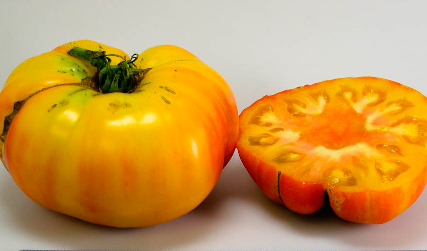 Tomate Marvel Stripe