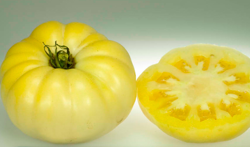 Tomate White Queen